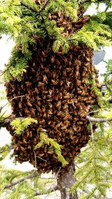 Honeybee Block
