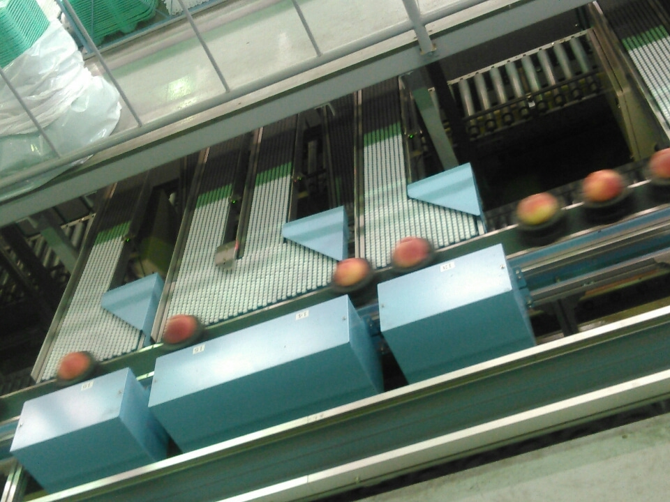 39709a4d3180 JA野田共同選果場「ふくしま 新発売。」今の福島を見に行くモニター ...