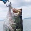 マルシン漁具 ヴィー…