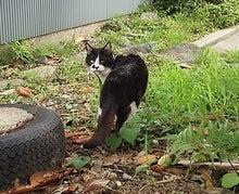2016.07.16 護国神社の猫