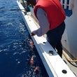 沖メバル本日の釣果