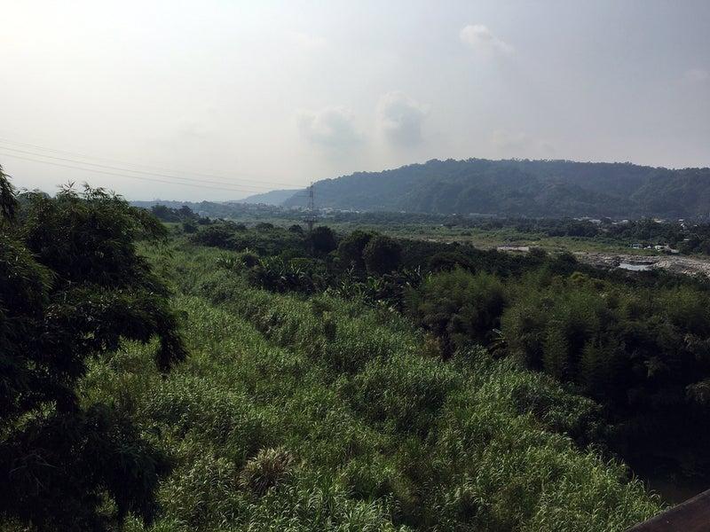 29河川敷ジャングル1
