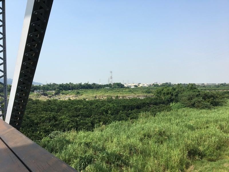 30河川敷ジャングル2