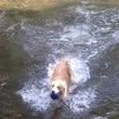 またまた川遊び 中平…