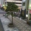 明日から高崎祭りです