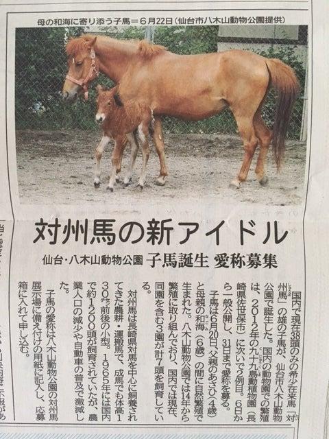 八木山動物園子馬記事