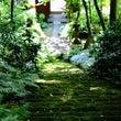 木漏れ日の妙法寺pa…