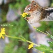 リスさんが野の花にう…