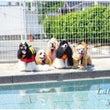 【プール開き!201…