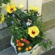 新しい花の寄植え!