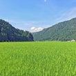 福井の夏の田園風景