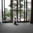 縁側に猫。
