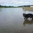 トリガーさんの水遊び
