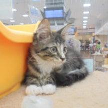 ネコちゃんのご紹介