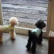 Dog and Se…