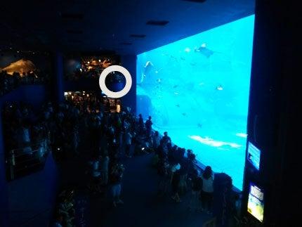 美ら海水族館穴場位置