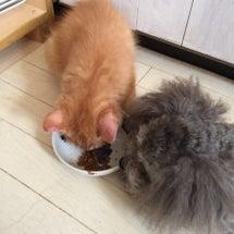 猫のご飯は美味しいワ…