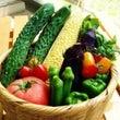 夏野菜は美味しい!