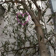 シンボルマークの木