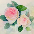 透明水彩 百合と薔薇