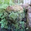 英彦山・高住神社で汲…