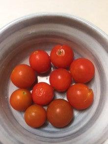 ミニトマト_3回目の採取