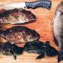 #大漁 #お魚天国