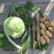 デルタ自然栽培野菜販…