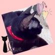 黒猫のジジ。