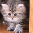 NNo4のペルシャ猫…