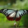 「いいなぁ、蝶は空を…