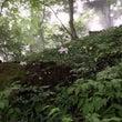 御岳山のレンゲショウ…