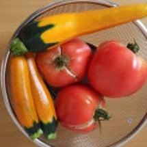 それからの~トマト♪…