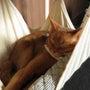猫カフェや他連休とか…