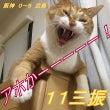 阪神 0-5 広島