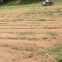 蕎麦畑の準備