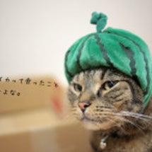 スイカ猫再び。