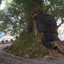 樹齢500年