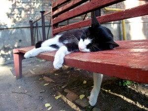 夏の疲れきましたか!?