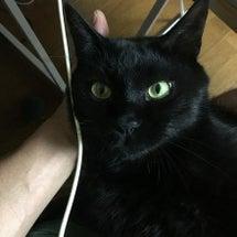 うちの黒猫、テラです…
