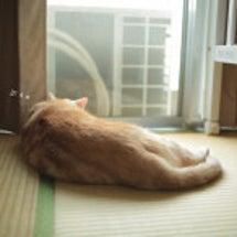 和室の猫ら。