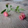 小さな小さなバラで