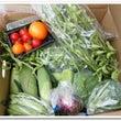 お野菜たちと3わん♪