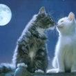 新月・半影月食デトッ…