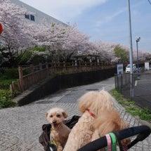 2016/4月 桜~…