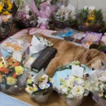 サラ、花に囲まれて!