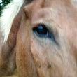 スマホをいじる馬