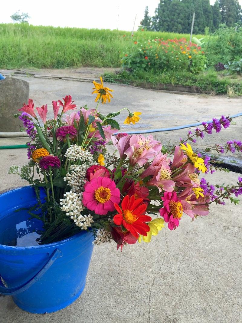 墓参りはお庭のお花でいっぱいに#お盆花