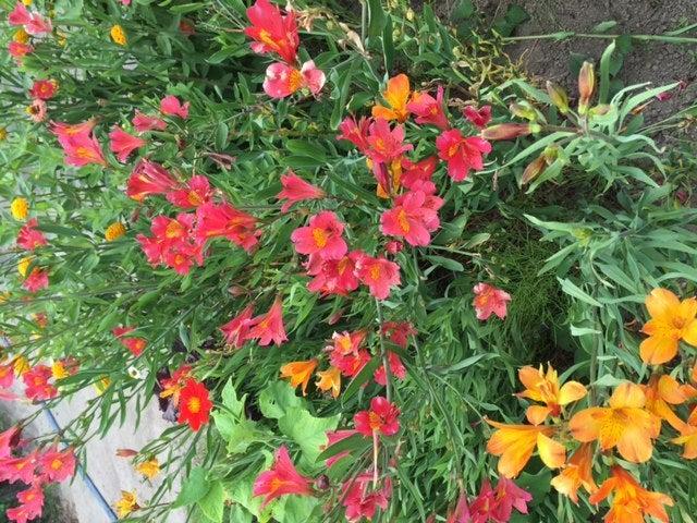 鮮やかなお花がいっぱい☆