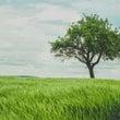 木の上に立って見る